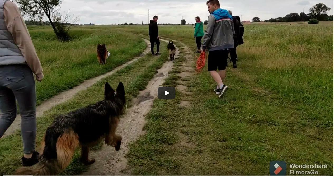 Zajęcia z samokontroli dla psów