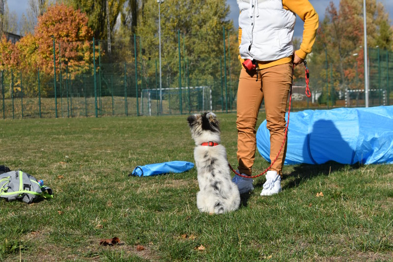 Szkolenia Grupowe dla psów